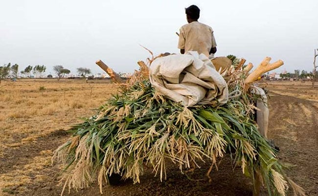 Delhi To Introduce MSP For Farmers Based On Swaminathan Commission Report