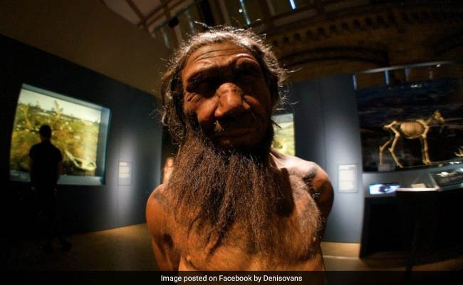 Rare Primitive Humans May Have Made Tools, Jewellery: Study