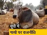 Video : गाय पर सियासत, गांव वाले परेशान