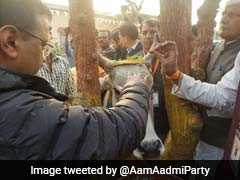 "Arvind Kejriwal Visits ""Country's Best"" Cow Shelter, Takes A Shot At BJP"