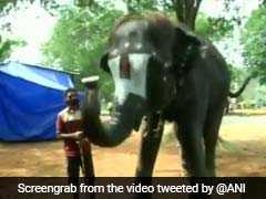 Watch: Elephant Plays Mouth Organ At Camp In Tamil Nadu