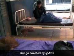'सुशासन बाबू' का स्वास्थ्य विभाग बदहाल, नवादा में मरीजों के बेड पर आराम फरमा रहे कुत्ते, तेजस्वी ने कही यह बात