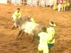 Those Below 21 Cannot Participate In Jallikattu: Top District Officer