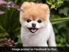 नींद में ही हुई 'दुनिया के सबसे क्यूट' कुत्ते की मौत, फेसबुक पर हैं 16 लाख फॉलोअर्स