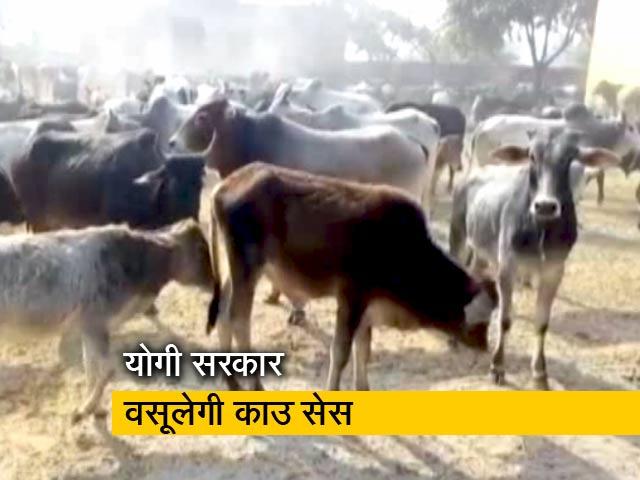 Videos : अब योगी सरकार गायों की देखभाल के लिए वसूलेगी काउ सेस