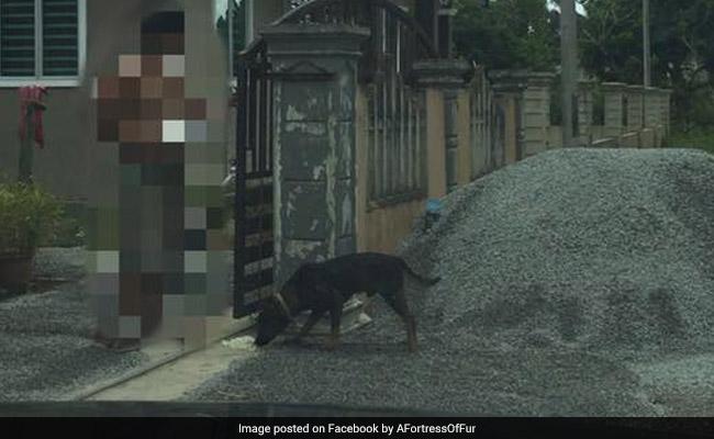 VIDEO: इंसान बना हैवान, छोटी-सी बात पर ली मासूम की जान, पहले दिया जहर और फिर पीट-पीटकर कर दी हत्या
