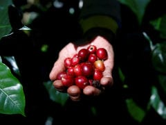 "More Than Half The World's Coffee Varieties Face ""Extinction Risk"""