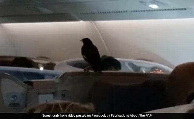 Watch: Mynah Bird Found Aboard London-Bound Singapore Airlines Flight