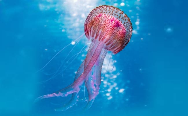 Image result for jellyfish