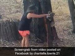 Video Of Koala Drinking Water From Bottle In Australia Goes Viral