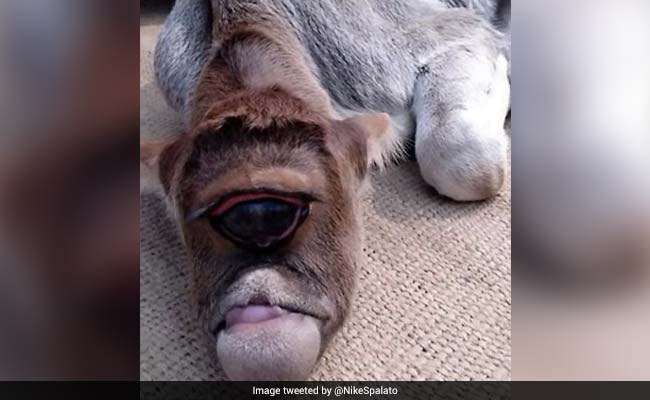 VIRAL VIDEO: एक आंख वाली गाय को भगवान मान बैठे लोग...कर रहे हैं कुछ ऐसा