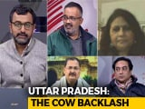 "Video : Truth vs Hype: Is Yogi Government Facing A ""Cow Backlash""?"