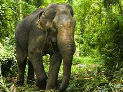Man Trampled To Death By Wild Elephants In Chhattisgarh: Report