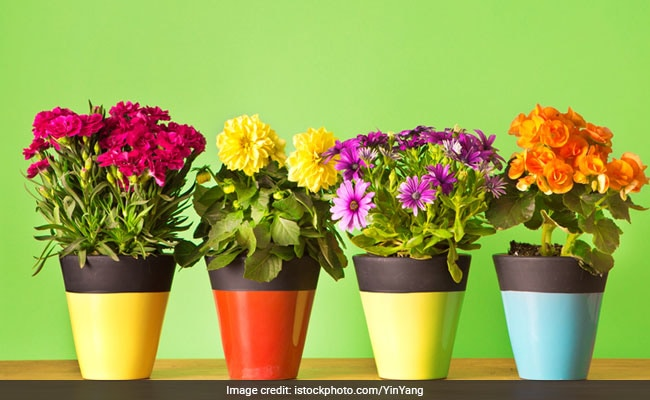 5 Sets Of Planters To Brighten Up Your Living Space