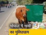 Video : मध्य प्रदेश के भोपाल में गायों का पहला श्मशान घाट
