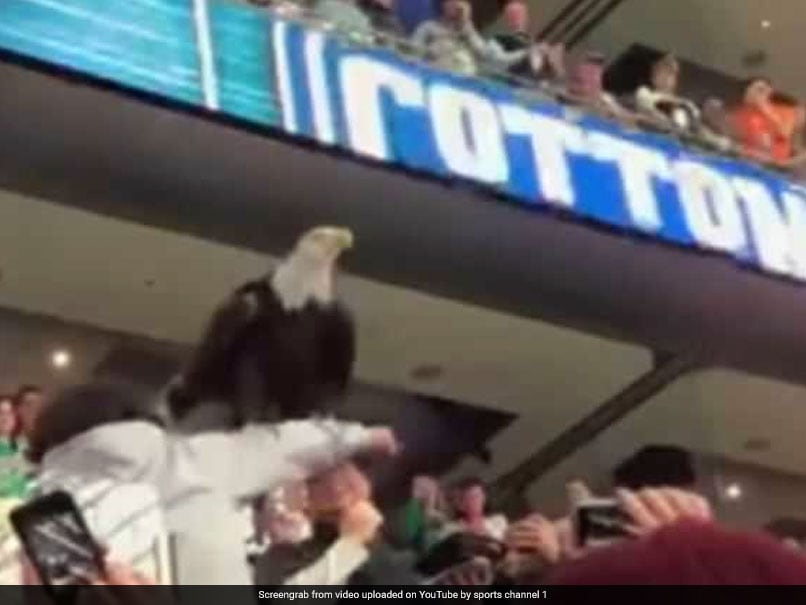 Eagle Steals The Show By Landing On Fans During College Football Match
