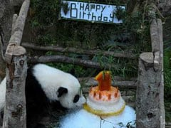 Panda Celebrates First Birthday In Malaysian Zoo With An Ice Cake