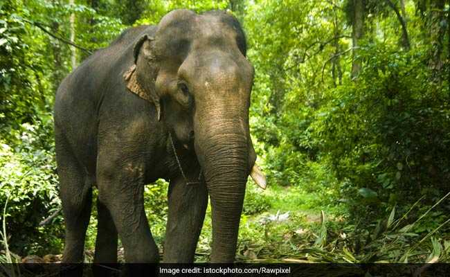 Elephant Tramples 60-Year-Old Woman In Tamil Nadu's Coimbatore