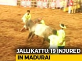 Video : 19 Injured At Jallikattu Event In Tamil Nadu. 1,000 Bulls At Mega Fest