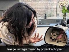 प्रियंका चोपड़ा के 'डायना' को मिला नया घर, बार-बार बुलाने पर नहीं चाहती निकलना- देखें Pics