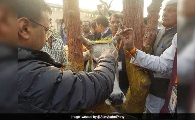 Arvind Kejriwal Visits 'Country's Best' Cow Shelter, Takes A Shot At BJP