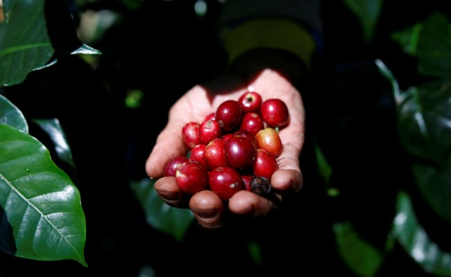 More Than Half The World's Coffee Varieties Face 'Extinction Risk'