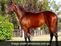 "Horse Named ""Australian Of The Year"""