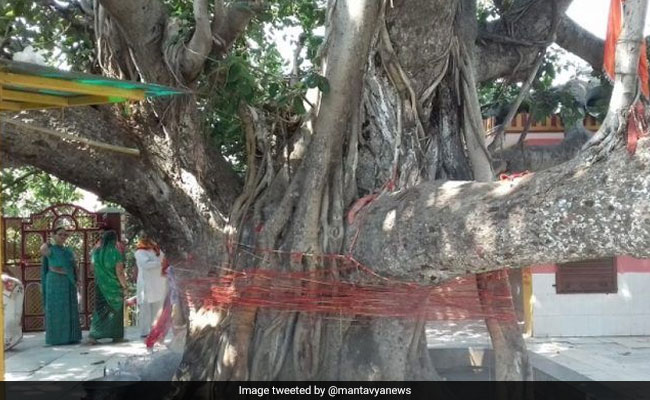 Kumbh Mela 2019 Quiz: 450 साल बाद किस वृक्ष के दर्शन के लिए प्रयागराज के ओडी किले में आम लोगों को जाने की अनुमति मिली?