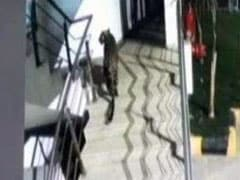 Panic After Leopard Seen At Shopping Mall, Then Hotel Basement In Thane