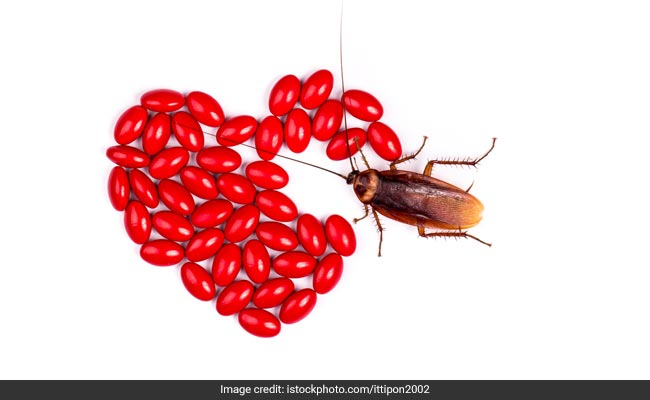 On Valentine's Day, Name A Cockroach After Your Ex, Thanks To This Zoo