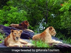 19-Year-Old Ailing Lioness Dies At Kerala Safari Park