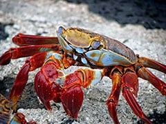 MIT Scientists Using Lobster Exoskeleton To Develop Flexible Body Armour