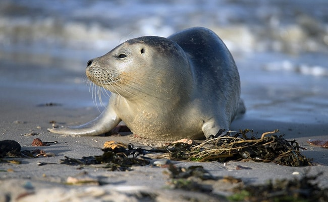 Scientists Look For Owner Of USB Drive Found In Leopard Seal's Poop