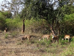 4 Black Bucks, Spotted Deer Among 9 Animals Found Dead In Rescue Centre
