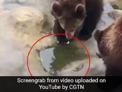 Man Feeding Bears Accidentally Throws iPhone At Them. Watch