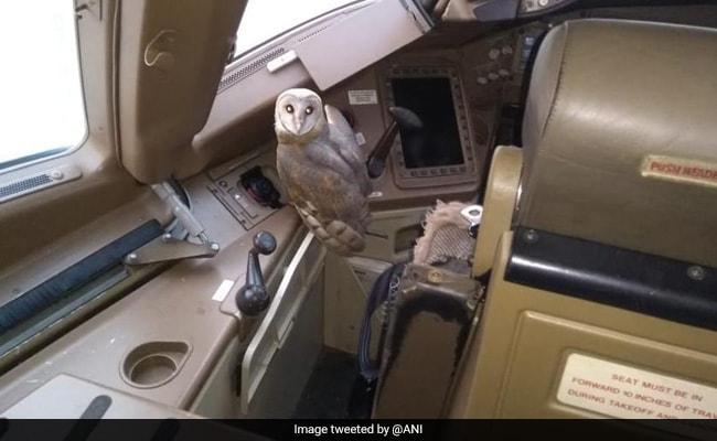Owl Found In Jet Airways Plane Cockpit At Mumbai Airport