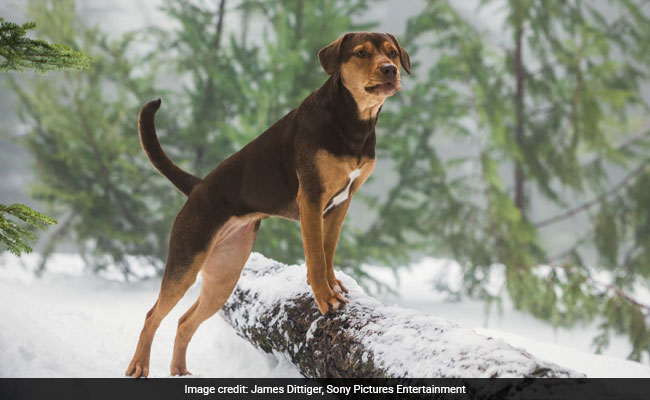 How A Stray Puppy Rescued From A Trash Pit Became A Movie Star