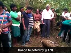 Body Of Leopard Found In Odisha Reserve