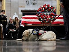 George HW Bush's Dog Starts Job With Wounded US Service Members, Veteran