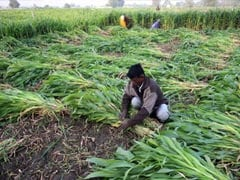 Funds Under PM-Kisan Scheme Yet To Be Transferred To Farmers In UP