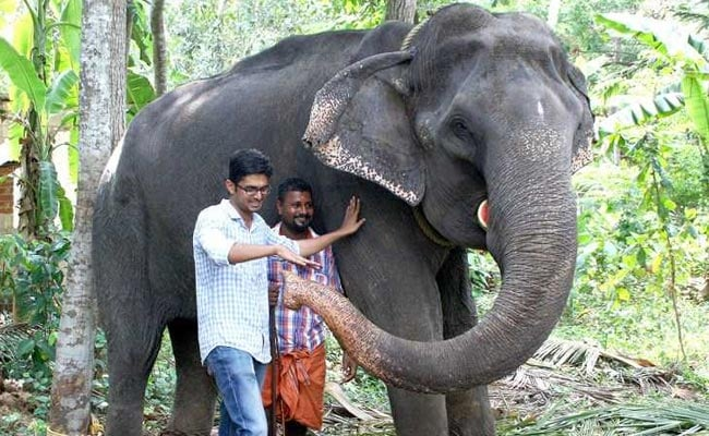 India's Oldest Captive 'Granny' Elephant Dies At 88