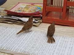 VIDEO: कुंभ में चिड़िया से पता कर रहे 'भविष्य', समस्या निदान के लिए 'चमत्कारी अंगूठी' का सहारा
