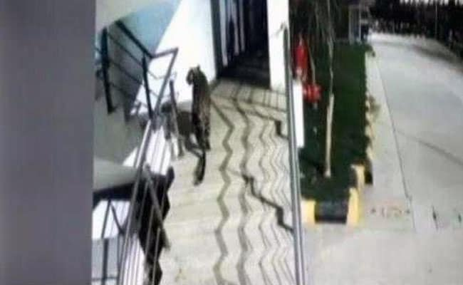 CCTV Shows Leopard In Mall Near Mumbai, Captured Later In Hotel