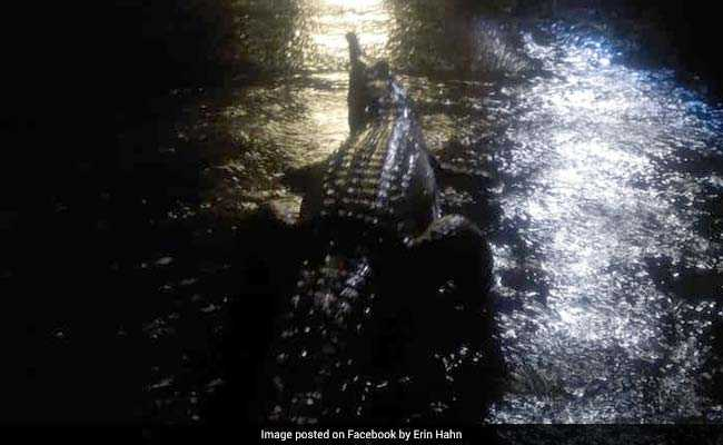 Crocodiles Out On Streets In Australia After Devastating Floods