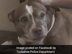 Pet Dog Saves Family From Gas Leak, Wins Hearts Online
