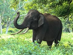 Wild Elephant Crushes 5 People To Death Across Two Odisha Villages