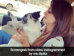 दीपिका कक्कड़ ने कार में डॉगी संग कुछ यूं किया डांस, Video इंटरनेट पर हुआ वायरल
