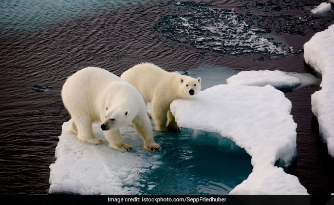 Russian Arctic Islands Sound Emergency Over'Invasion By Polar Bears