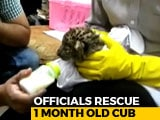 Video : Leopard Cub Smuggled From Bangkok To Chennai. Watch Airport Staff Feed It