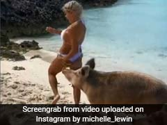 Model's Photoshoot At Pig Island Goes Very Wrong. 5 Million Views For Video